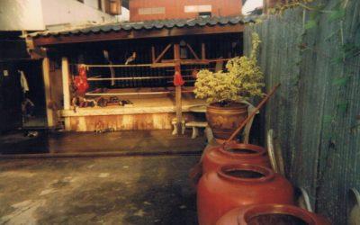 Thailand Story Part 1 JWP